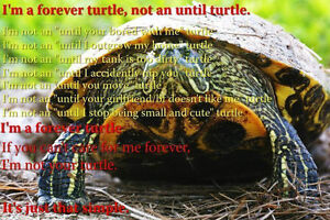 Red eared slider turtles for adoption