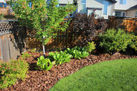 Alpine Vista Landscaping - All of your lawn care and landscaping