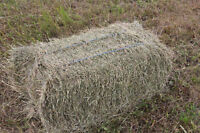 Horse hay, small square bales