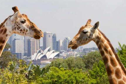 Taronga Zoo Ticket Pass voucher