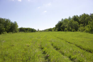 Bare Land (160 acres) in the RM of Prairie View( Birtle)