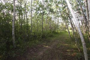Treed Half Acre Private Lot ~ Pelican Point, Buffalo Lake
