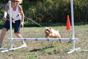 K9 Komfort Inn - Agility Training- Starts Thurs Evening