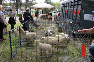 Mobile Petting Zoo for Birthdays/Seniors homes/Special events Peterborough Peterborough Area image 10