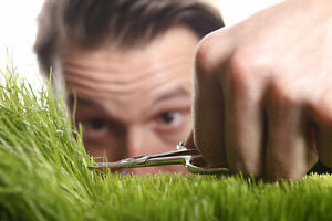 Lawn Care, Lawn Mowing, Gardening and aerating.