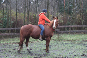 2003 sorrel QH kids/trail horse Campbell River Comox Valley Area image 3
