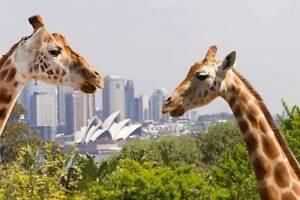 Taronga Zoo Ticket Pass Voucher Sydney City Inner Sydney Preview