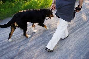 Home Security Checks & Pet Visits
