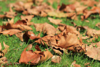AFFORDABLE FALL CLEANUP