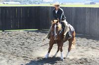 SWEETHEART QUARTER HORSE GELDING