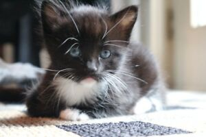 Cute Kittens Looking For Forever Home!