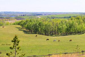 Horse Boarding near Blackfalds/Red Deer/Penhold/Innisfail/Bowden