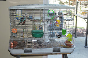 2 Male budgies plus cage and accessories