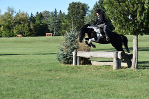 Canadian/Paint Mare For Lease