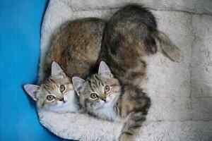 Unique kittens