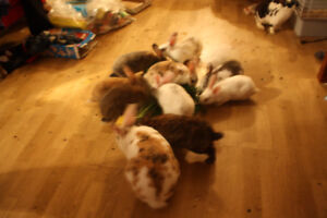 5 months to eight week old bunnies