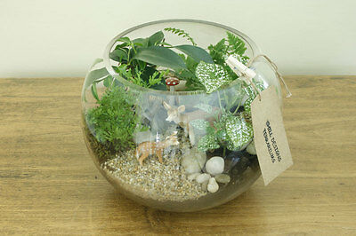 Terrariums Are An Amazing, Relatively Low Maintenance, Living Decoration    A Miniature World Or Self Contained Garden. Caring For Your Terrarium Is  Easy.