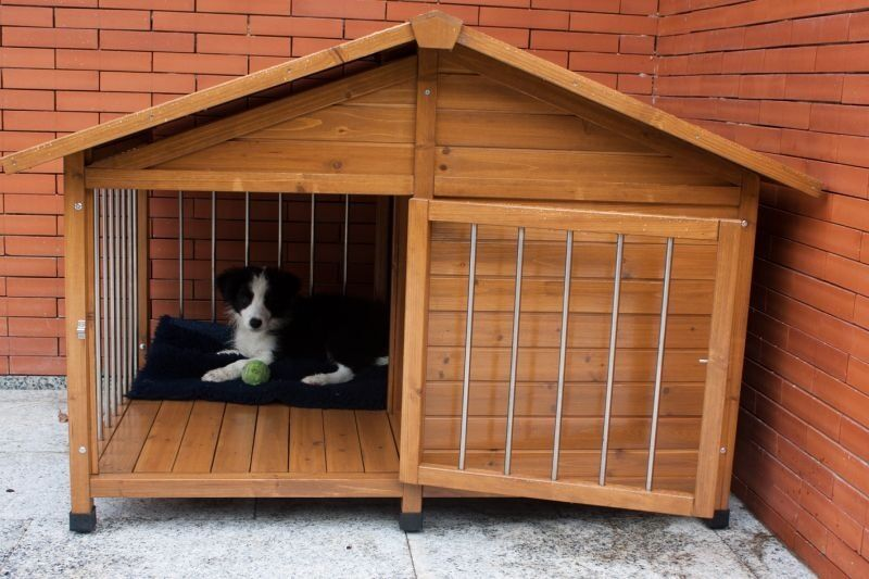 luxury dog kennel free delivery
