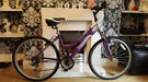 ladies lilac riviera mountain bike