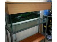 WANTED fish tank 3ft