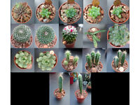 Various cacti and other succulents for sale