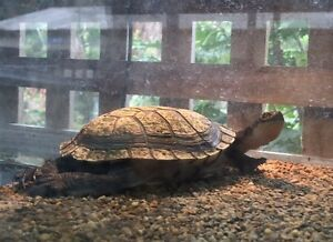 Turtle tortoise with full tank setup Boronia Knox Area Preview