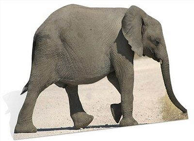 Baby Elephant Cut Out (BABY ELEPHANT LIFESIZE CARDBOARD Zoo Wildlife Animal CUTOUT STANDEE /)