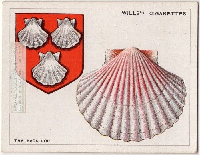 Scallop Shell Used On Coat Of Arms Or Family Crest 1920s Ad Card