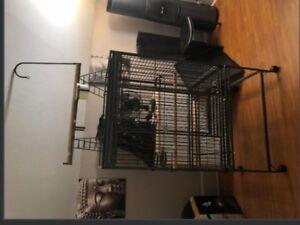 Grande cage à perroquet gris d Afrique ou amazone