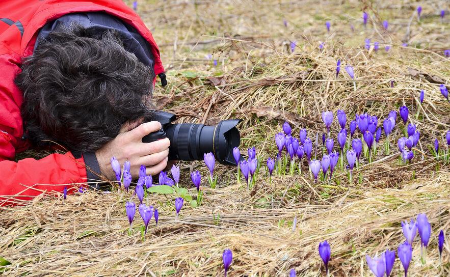 A Basic Guide to Garden Photography