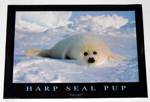 HARP SEAL PUP POSTER FROM 1995  RARE!