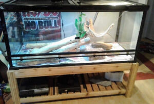 Complete Bearded Dragon Set-up, included 3 yr old female beardy