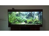 Juwel RIO 360L Tropical Fish Tank Aquarium