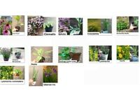 Perennial garden plants in small pot- £1.50 each please see my other adverts