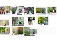 Perennial plants in pots for the garden £1.50 each