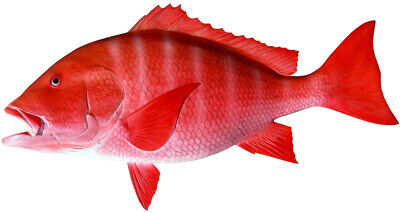 """Sport Fish Replica - 36"""" RED SNAPPER WALL MOUNT - Half Cast for the Budget!"""