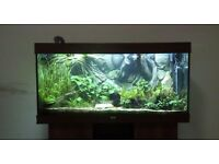 Juwel RIO 300 Tropical Fish Tank Darkwood and maching cabinet