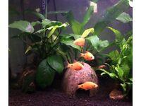 14 Gallon Tropical Fish Tank