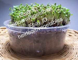 2,000 Curly Cress seeds. Heirloom ***SAME DAY SHIPPING***