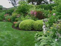 Garden Bed Cleanup and Maintenance