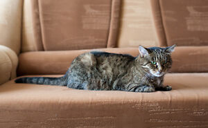 What is the Best Sofa Fabric for Pets?