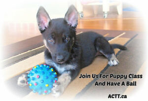 Positive Puppy Training & Socialization Classes