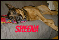 LOVELY SHEENA NEEDS A FOREVER HOME