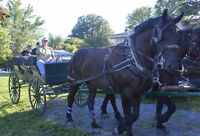 Great weekend family outing, Horse drawn wagon rides