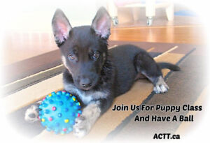 Positive Puppy Classes with Socialization