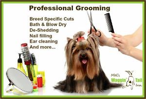Dog Groomer