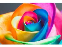 Gowers Flowers, Livingston Florist, Deliveries, Weddings, Funerals, Commercial, Handties, Bouquets