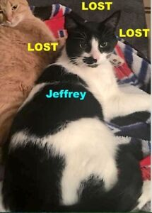 LOST CAT - BLACK/WHITE IN LAKEVIEW AREA