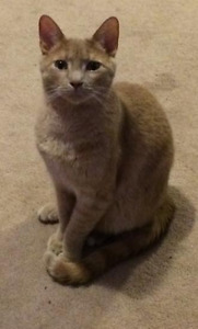 Male cat to give away