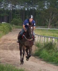 PEC rent facilities for horse training Caboolture Caboolture Area Preview